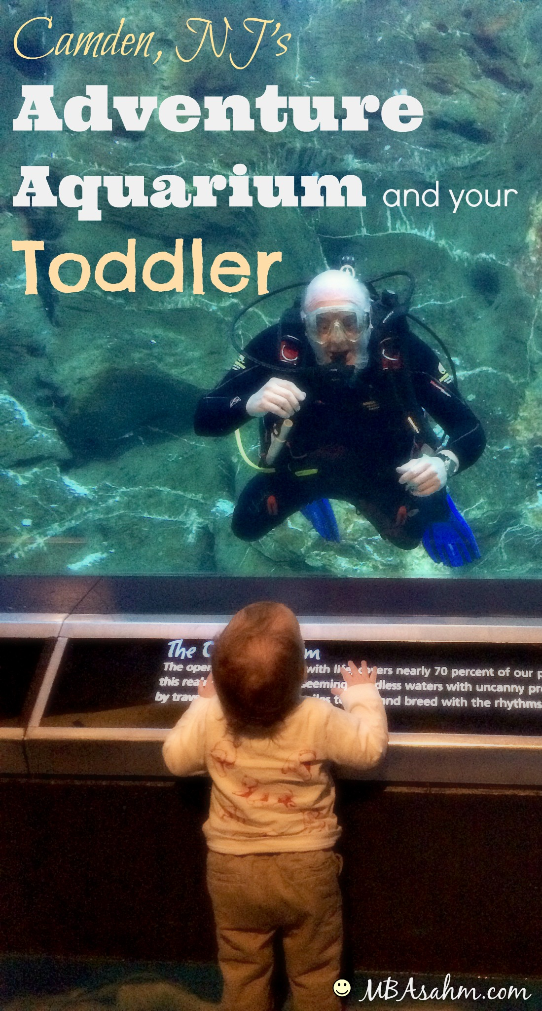 A Guide To Camden Nj 39 S Adventure Aquarium With Your