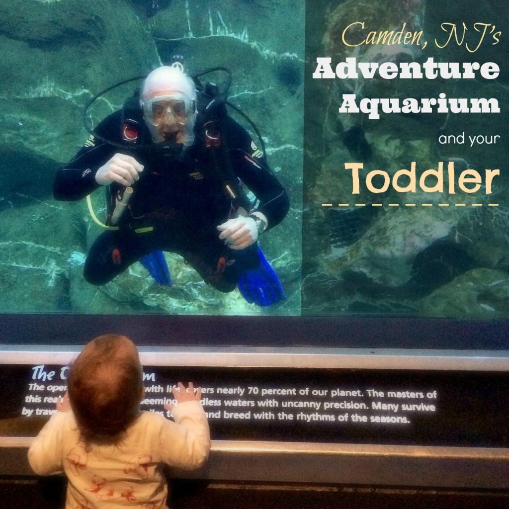 Camden NJ Adventure Aquarium and Your Toddler