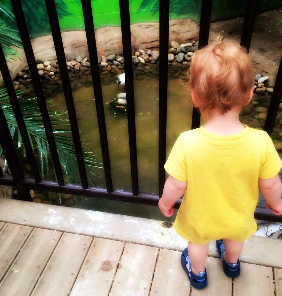 9 Reasons to Take Your Toddler to the Jersey Shore's Cape May Zoo