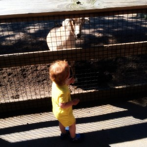 9 Reasons You Should Take Your Toddler to the Jersey Shore's Cape May Zoo